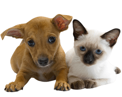 Dog and cat veterinary services
